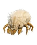 uyuz böceği ilaçlama